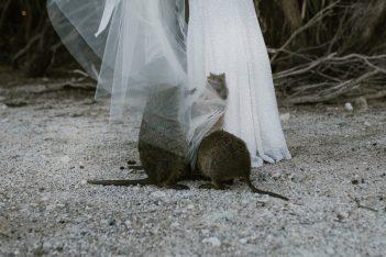 animals at weddings