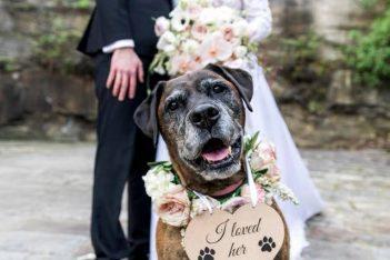 Wedding Paws